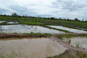 Some of the fish ponds in Lulembela village
