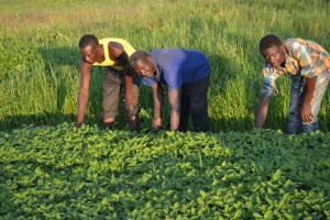 Young people farming at Bishop Kitula's farm.