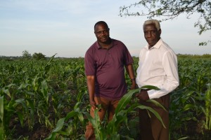 Bishop Josephat Magumba and Bishop Samwel Kitula surveying the 10 acre land affected by the worm.