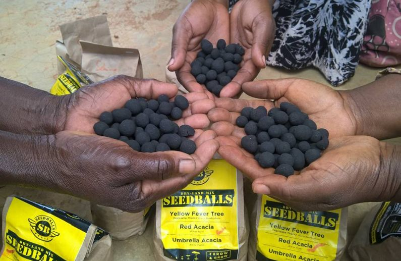 Agricultural freedom through the eyes of seedballing   OAIC